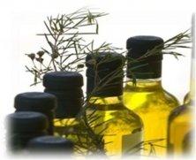 bitkisel yağ üretimi