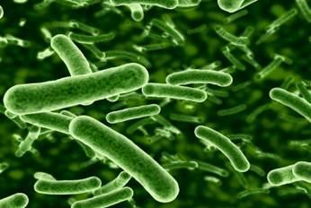 camtu mikrobiyojojik test